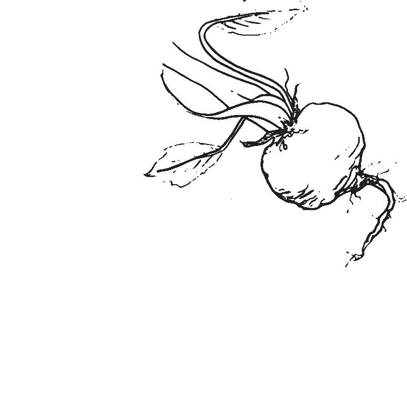 beetroot sketch